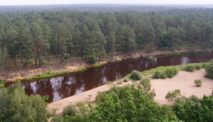 Житомирське Полісся називають українською тайгою